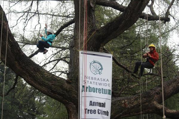 Participants can climb state champion tree at Earth Day Omaha