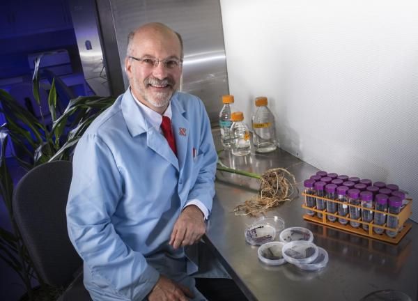UNL Leads $13.5 Million Research to Enhance Sorghum for Biofuel