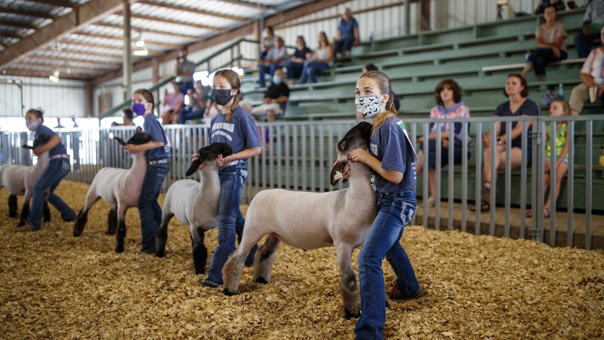 Nebraska County Fair