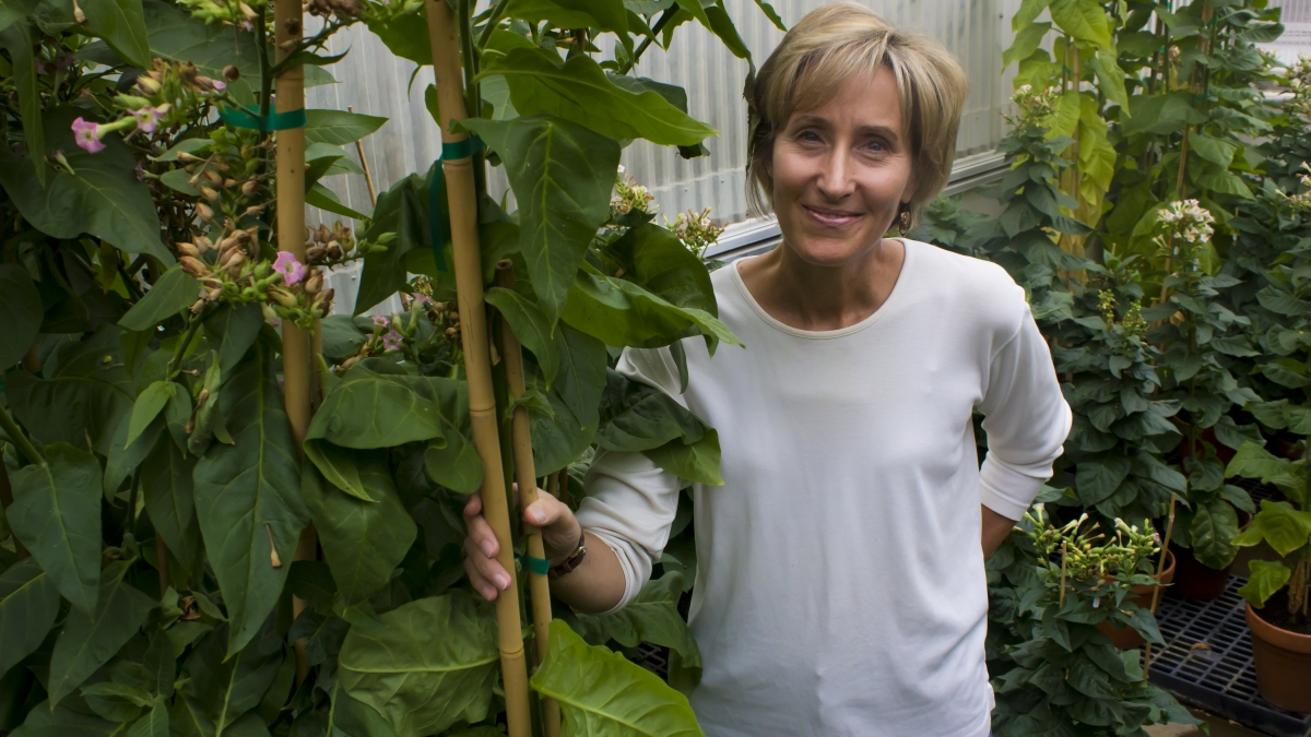 A woman standing with her plants. Links to larger image.