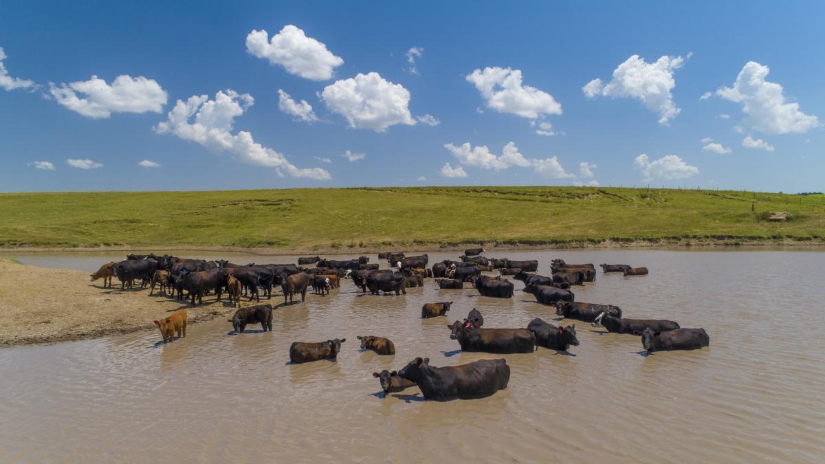 Nebraska cattle heat stress