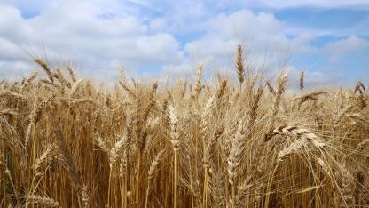 Nebraska Crop Production Clinics
