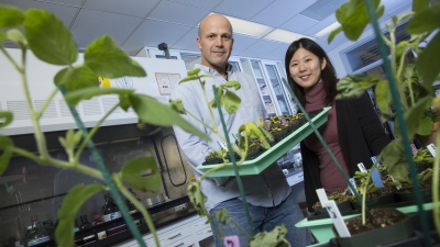 University of Nebraska researchers in greenhouse