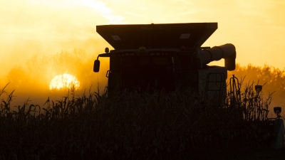 A combine in a field at sunset. Links to larger image.