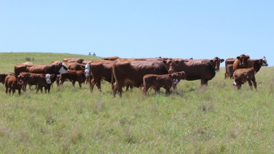 Nebraska beef production