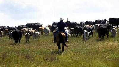 rancher horseback