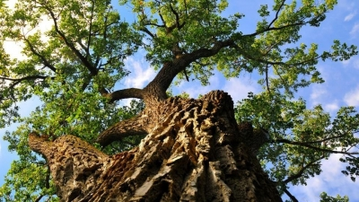 An image of a tree looking up from the ground. Links to larger image.