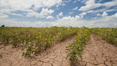 a field during a drought