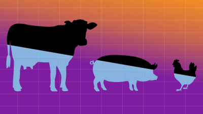 cattle pigs chicken