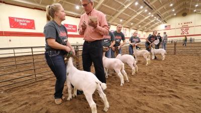 judge inspecting goat