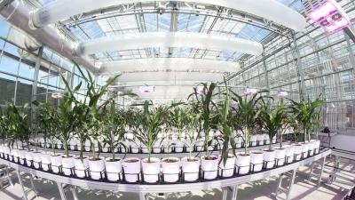 Nebraska Innovation Greenhouse