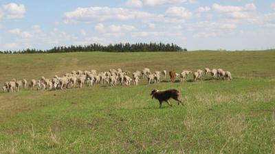 Nebraska Sheep & Goat Producers Association