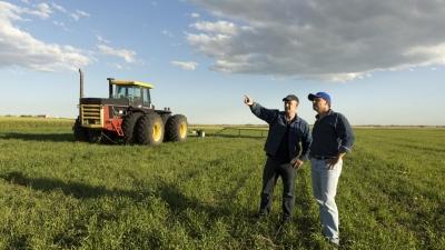 Farmers inspecting field