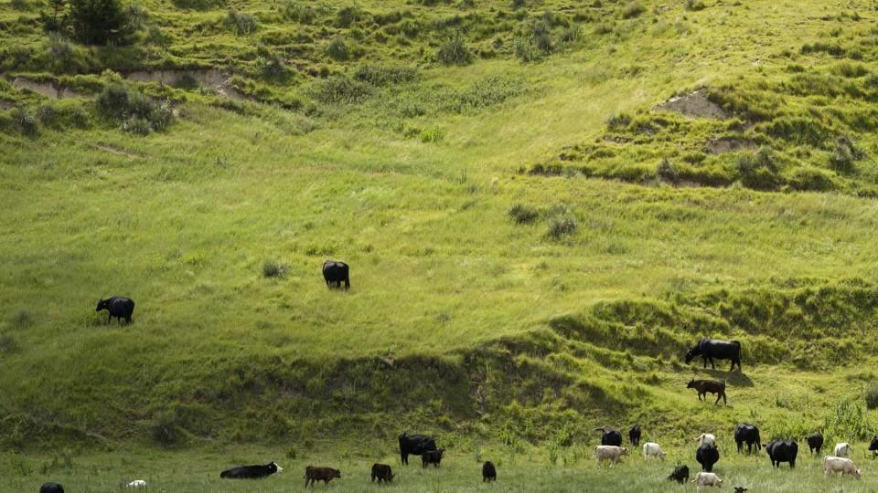 Grassland Studies