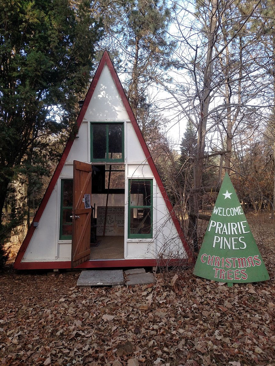 Prairie Pines