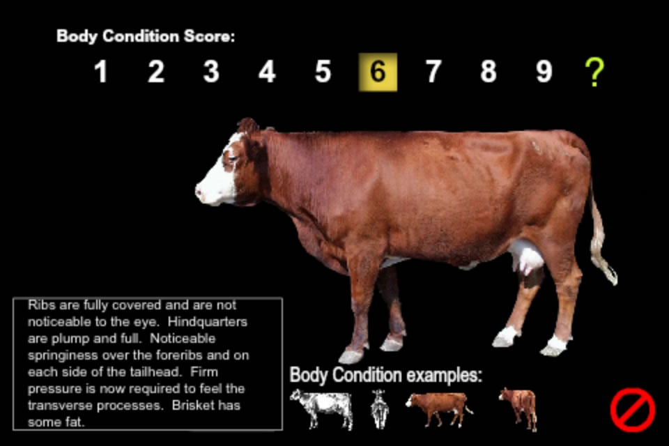 An example of body condition score. Links to larger image.