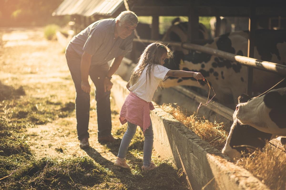 farm feeding at sunset