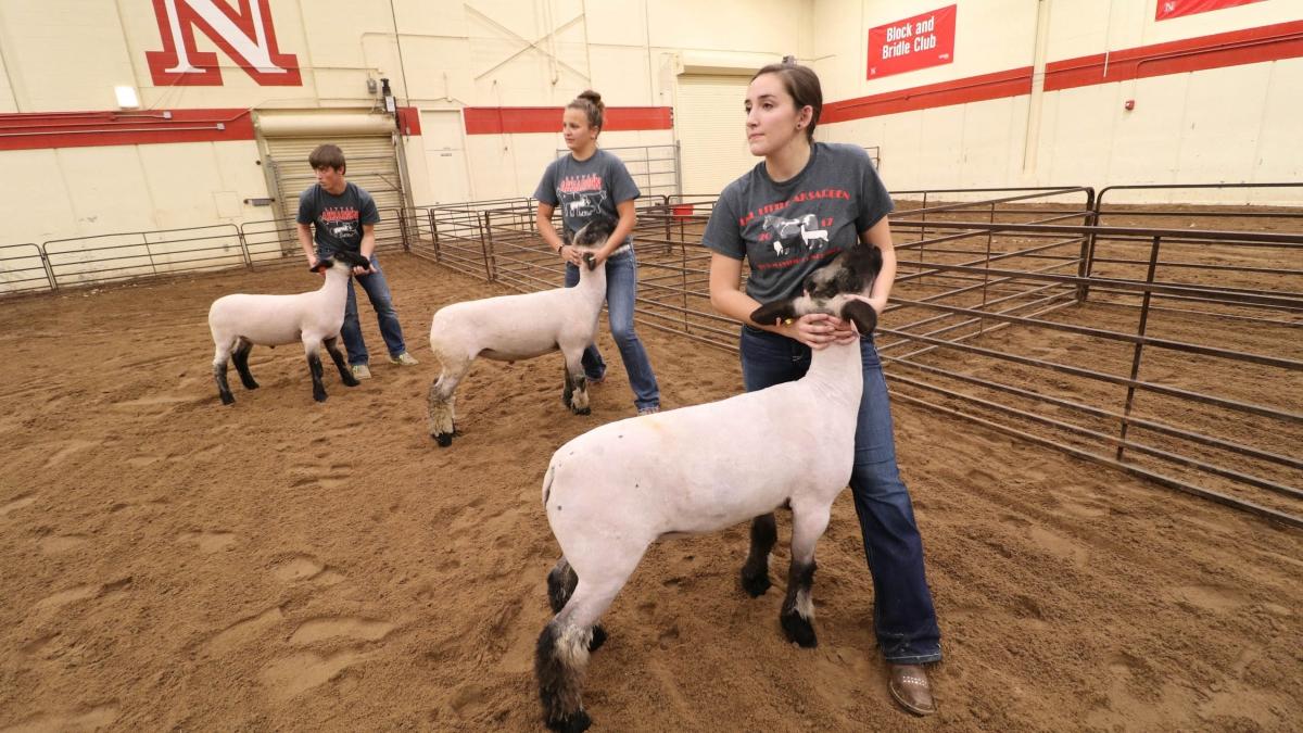 UNL virtual livestock judging camp