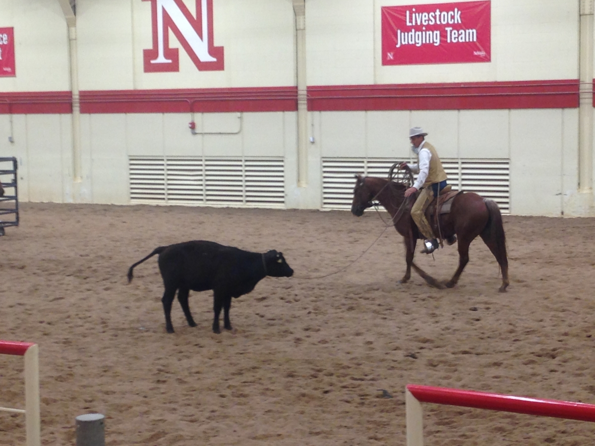 Stockmanship expert Curt Pate ropes a yearling. Links to larger image.