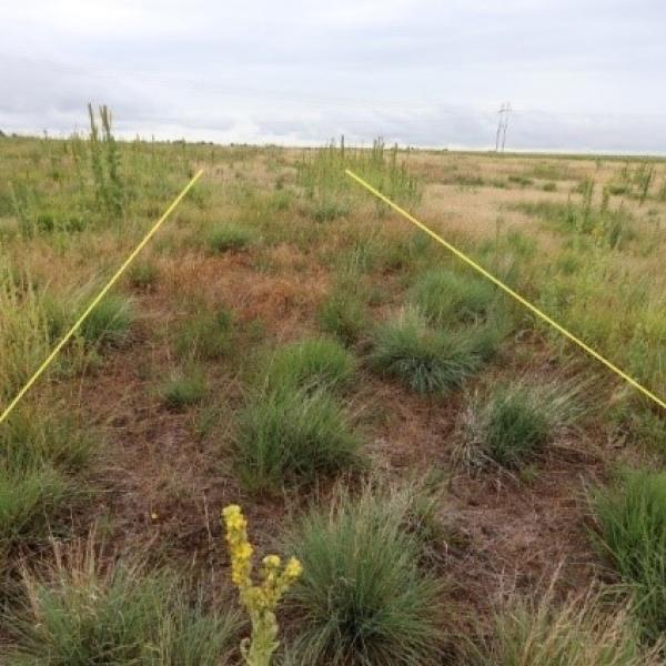 rangeland weeds