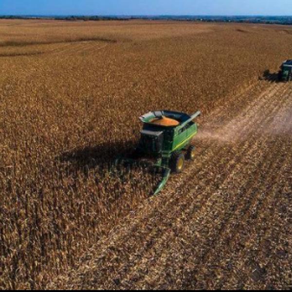 Combine working to harvest cornfield